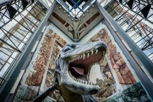 Mainz - Naturhistorisches Museum